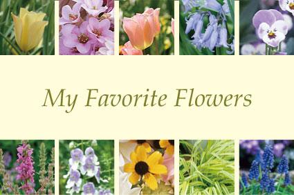 私のお気に入りの花